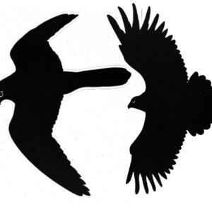 Bird scare sticker